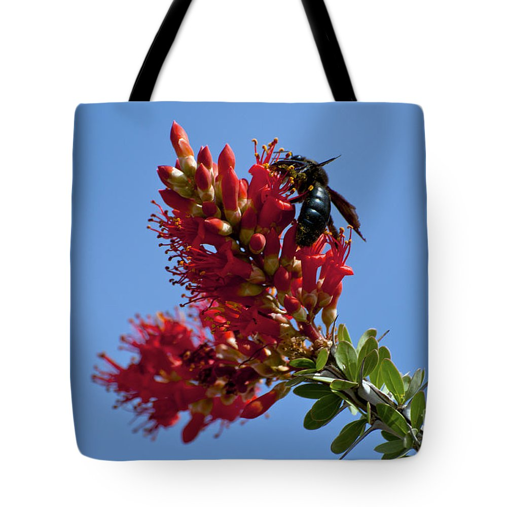 Big Bend Ranch State Park Texas Bee Bees Creature Creatures Flower Flowers Bloom Blooms Ocotillo Cactus Cacti Spring Tote Bag featuring the photograph Snack Time by Bob Phillips