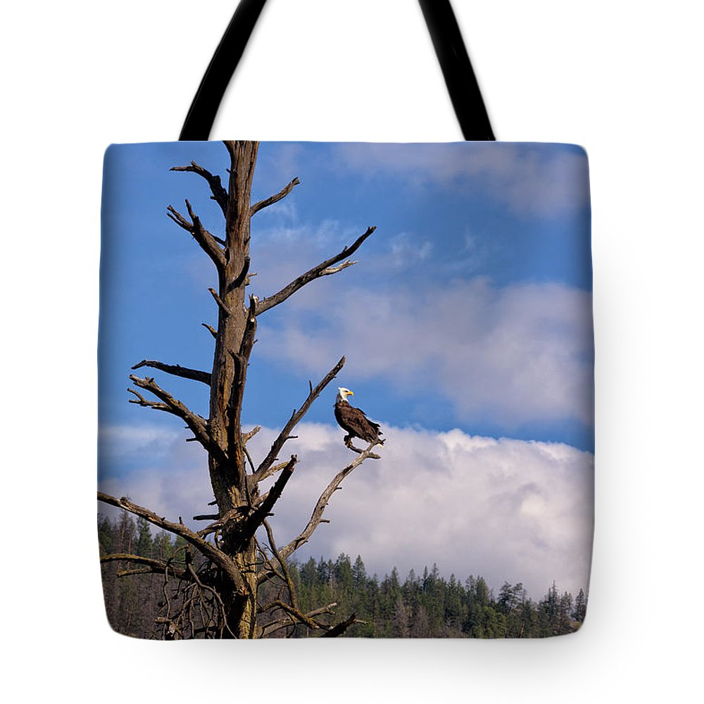 Nature Tote Bag featuring the photograph Snag by Kathleen Bishop