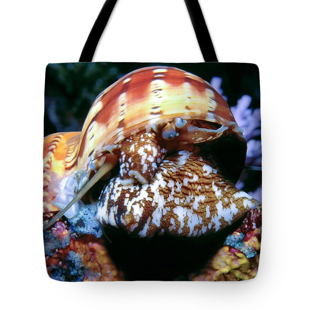 Micronesia Tote Bag featuring the photograph Snails 1 by Dawn Eshelman