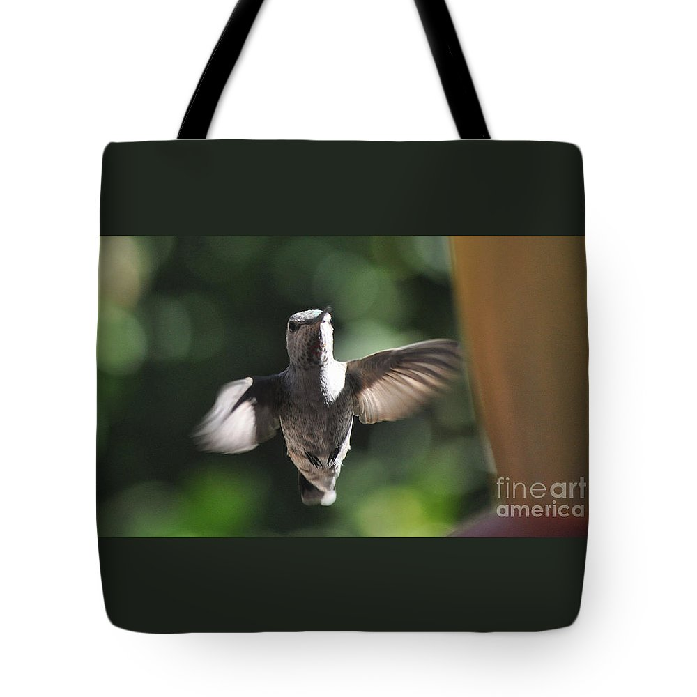 Hummingbird Tote Bag featuring the photograph Snow Angel Young Hummer by Jay Milo