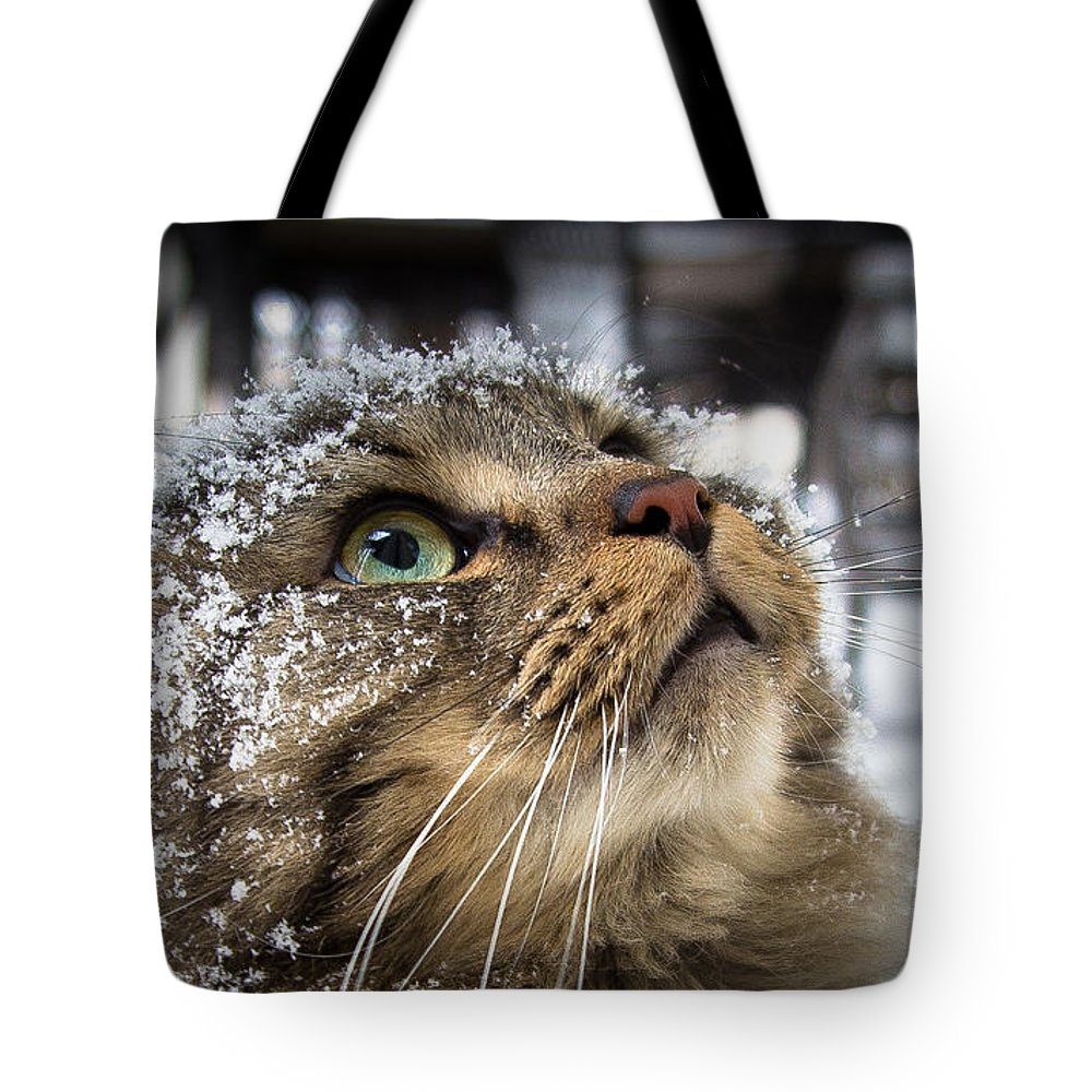 Cat Tote Bag featuring the photograph Snow Cat by Shane Holsclaw