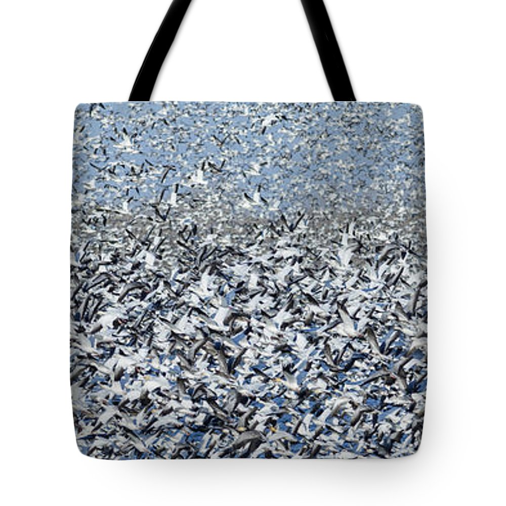Snow Geese Tote Bag featuring the photograph Snow Geese Flock In Flight by Art Whitton