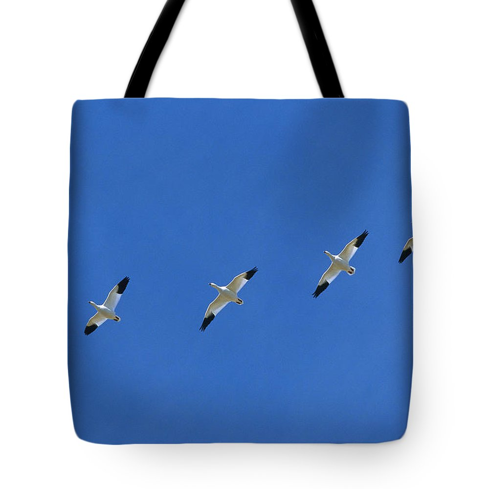 Bosque Del Apache Tote Bag featuring the photograph Snow Goose Flock In Formation by Konrad Wothe