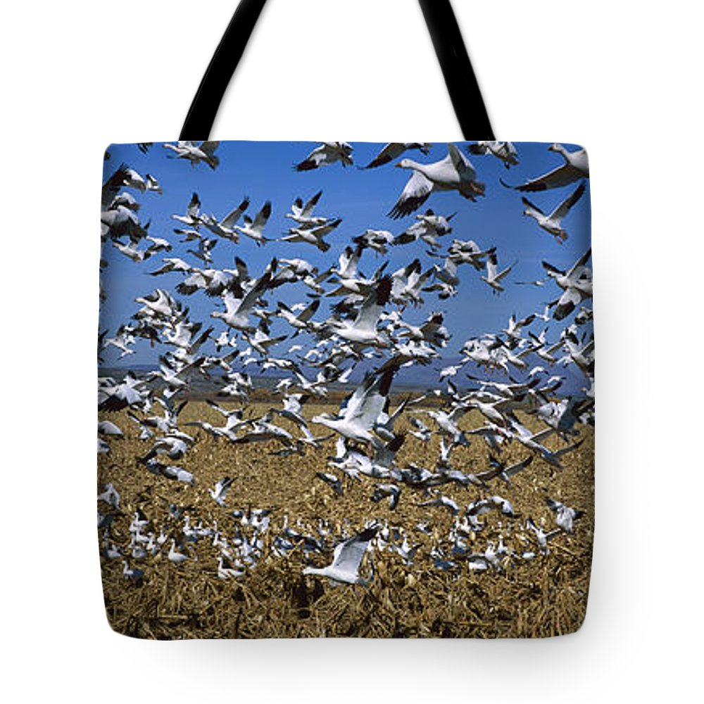 Bosque Del Apache National Wildlife Refuge Tote Bag featuring the photograph Snow Goose Flock Taking Off by Konrad Wothe