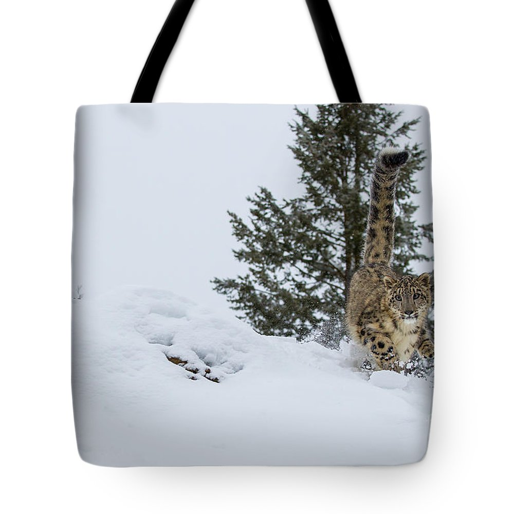 Leopard Tote Bag featuring the photograph Snow Leopard Periscope by Danny Nestor