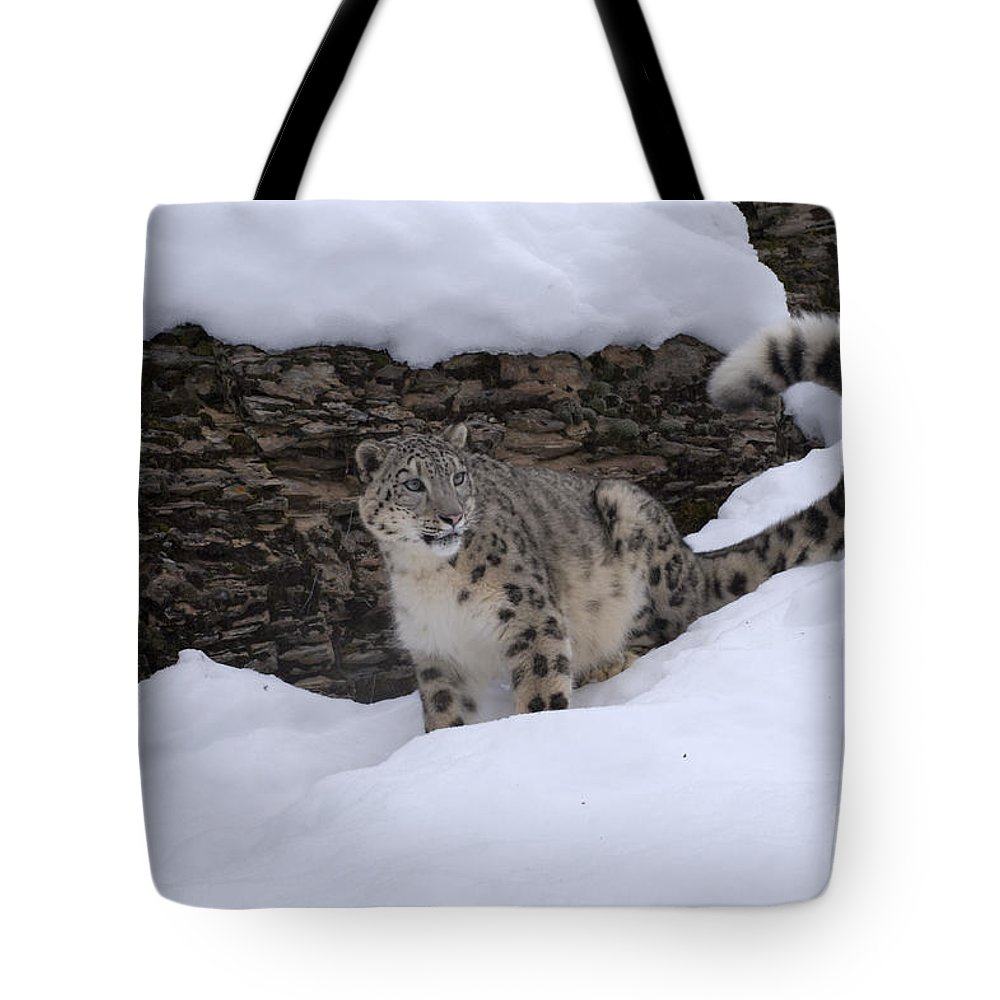 Snow Leopard Tote Bag featuring the photograph Snow Leopard by Sandra Bronstein