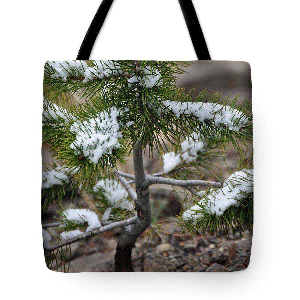 Yellowstone Tote Bag featuring the photograph Snow On Baby Pine Tree In Yellowstone by Bruce Gourley