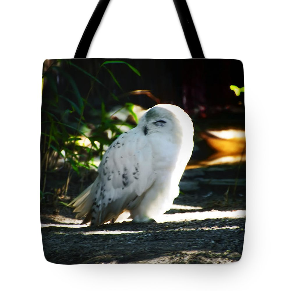 Snow Tote Bag featuring the photograph Snow Owl by Bill Cannon