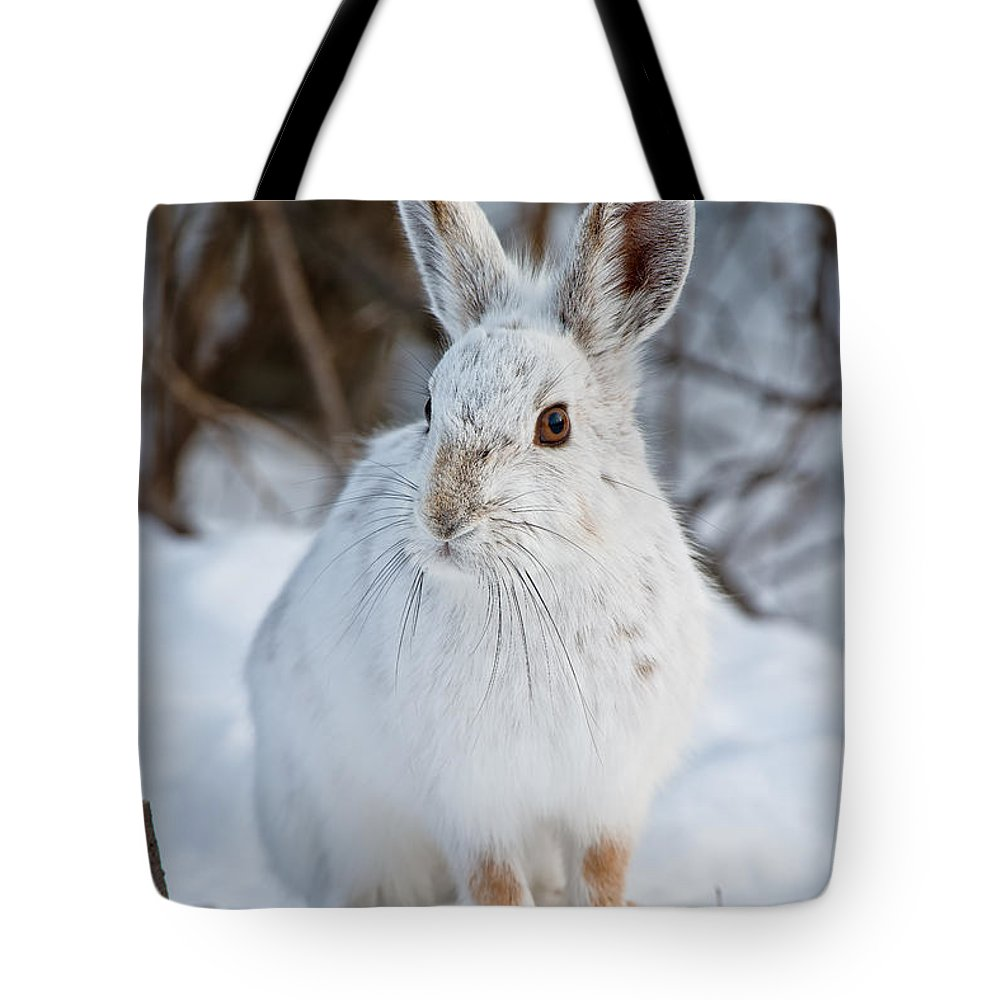 Snowshoe Hare Tote Bag featuring the photograph Snowshoe Hare Pictures 130 by World Wildlife Photography
