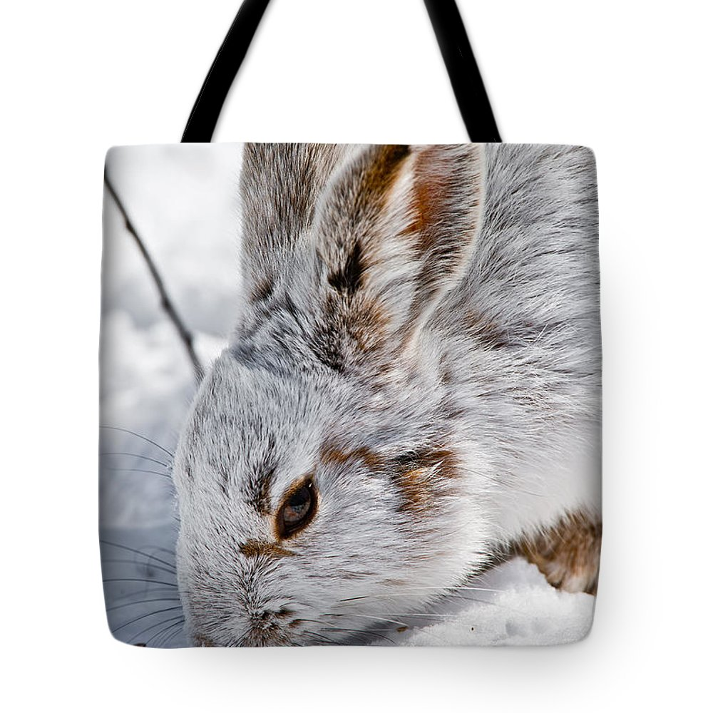 Snowshoe Hare Tote Bag featuring the photograph Snowshoe Hare Pictures 133 by World Wildlife Photography