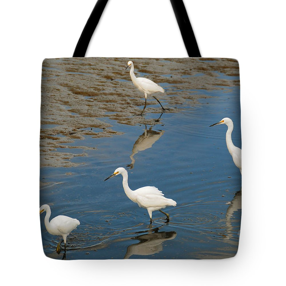 Snowy Egrets Tote Bag featuring the photograph Snowy Egret Lunch Break by Regina Geoghan