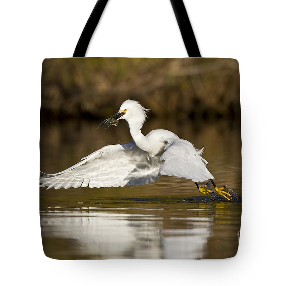Snowy Egret Tote Bag featuring the photograph Snowy Egret With Lunch by Bryan Keil