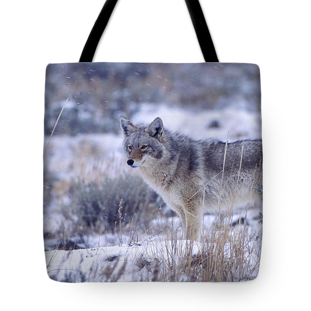 Coyote Tote Bag featuring the photograph Snowy Morning Watch by Sandra Bronstein