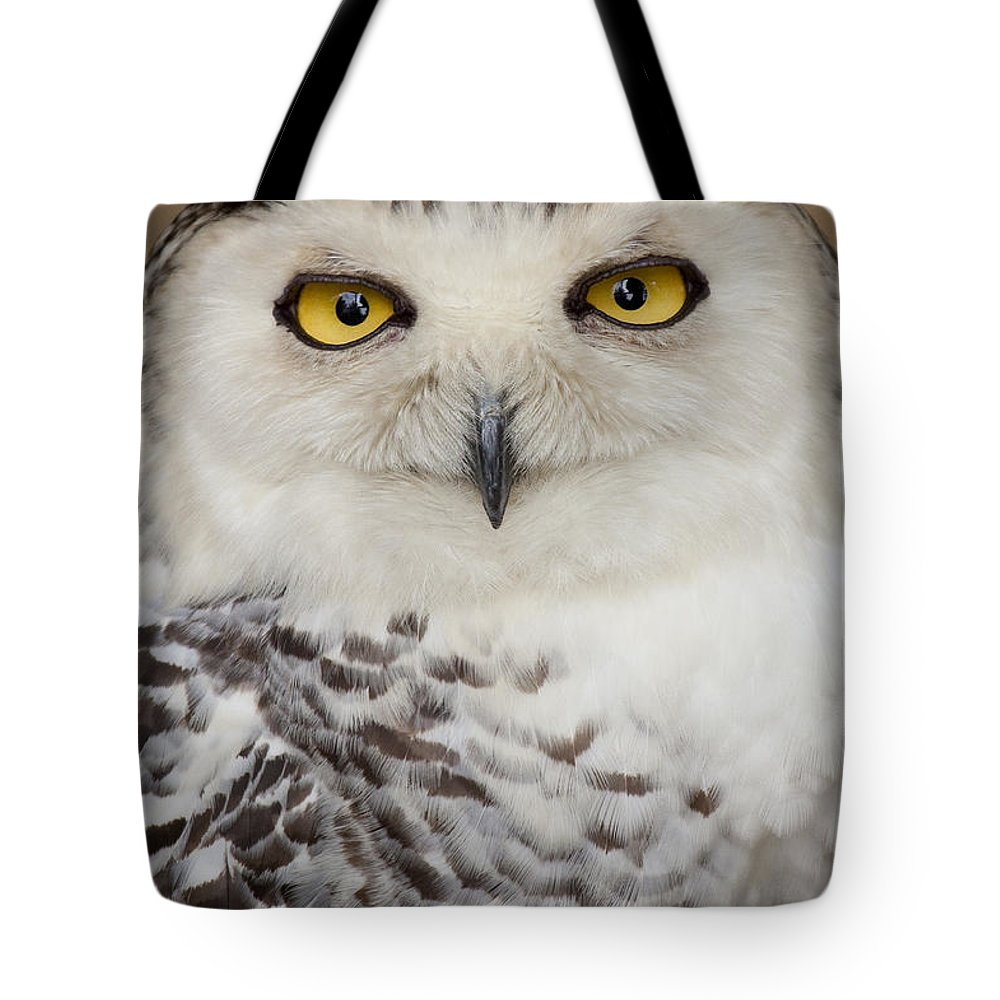 Bird Tote Bag featuring the photograph Snowy Owl 1 B by John Brueske