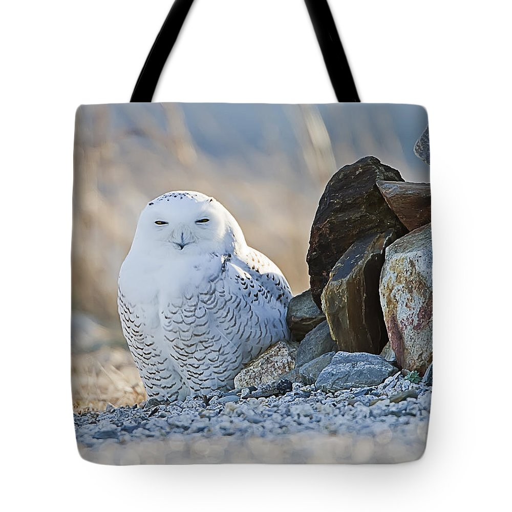 Snowy Owl Tote Bag featuring the photograph Snowy Owl Among The Rocks by John Vose