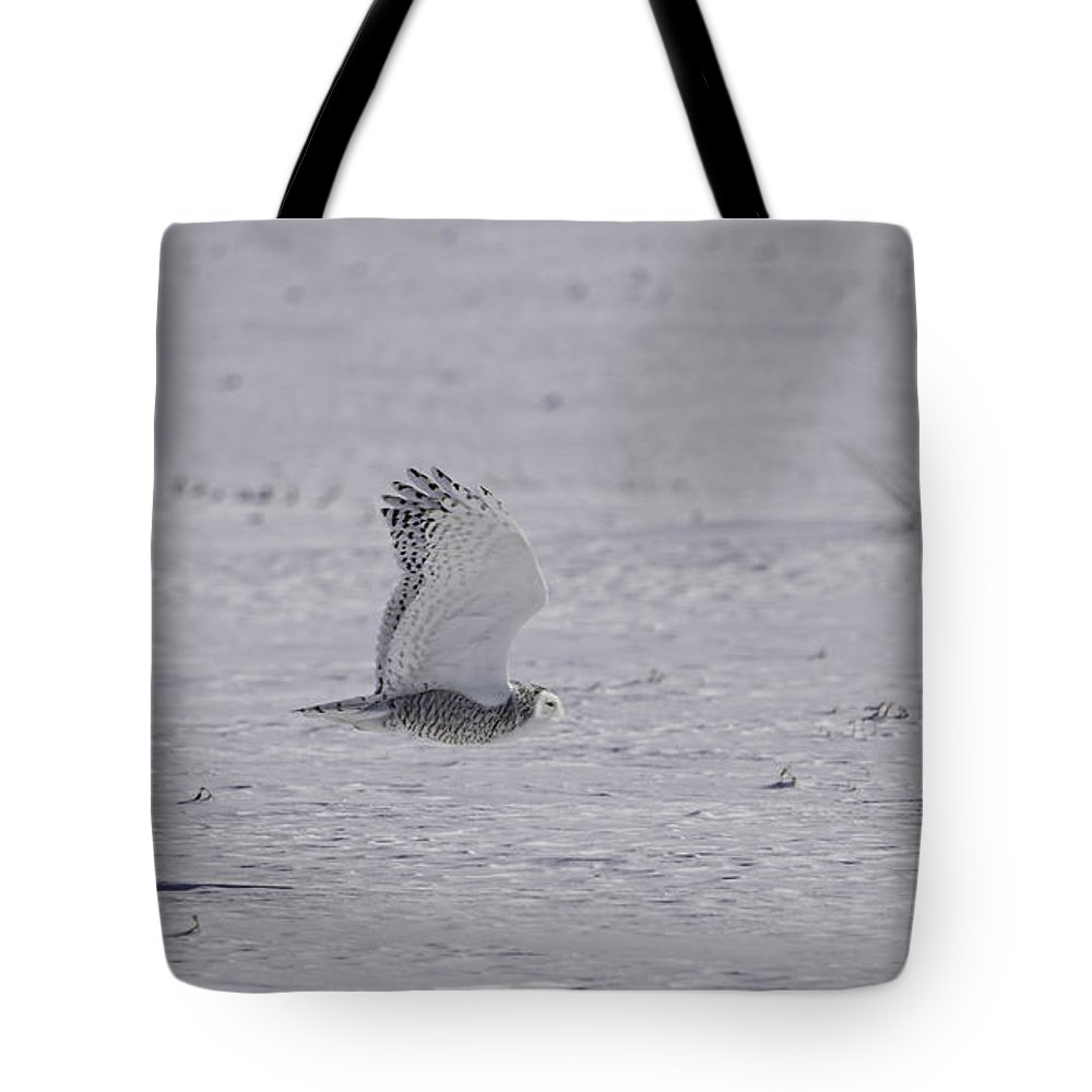 Snowy Owl (bubo Scandiacus) Tote Bag featuring the photograph Snowy Owl In Flight 2 by Thomas Young