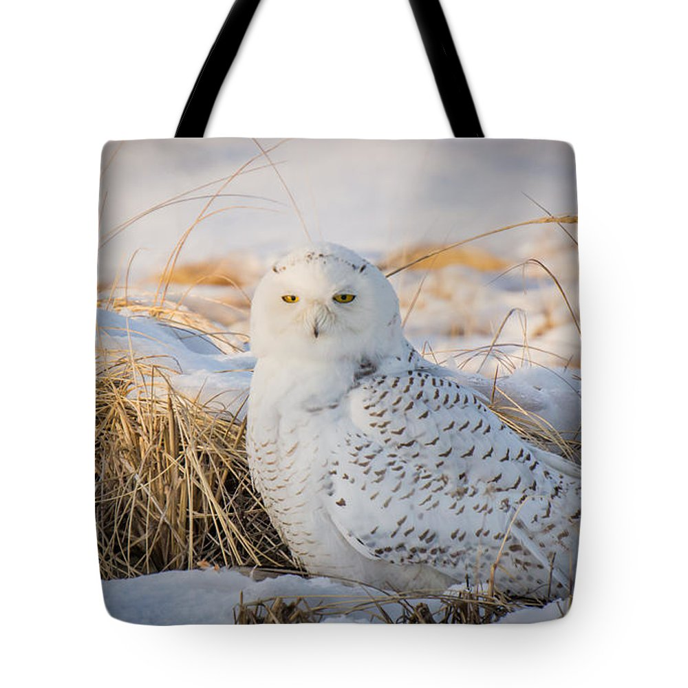 Landscape Tote Bag featuring the photograph Snowy Owl by Jose Cruz