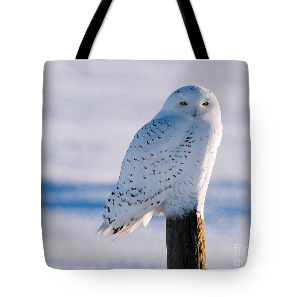 Snowy Owl Tote Bag featuring the photograph Snowy Owl On A Post by Shannon Carson