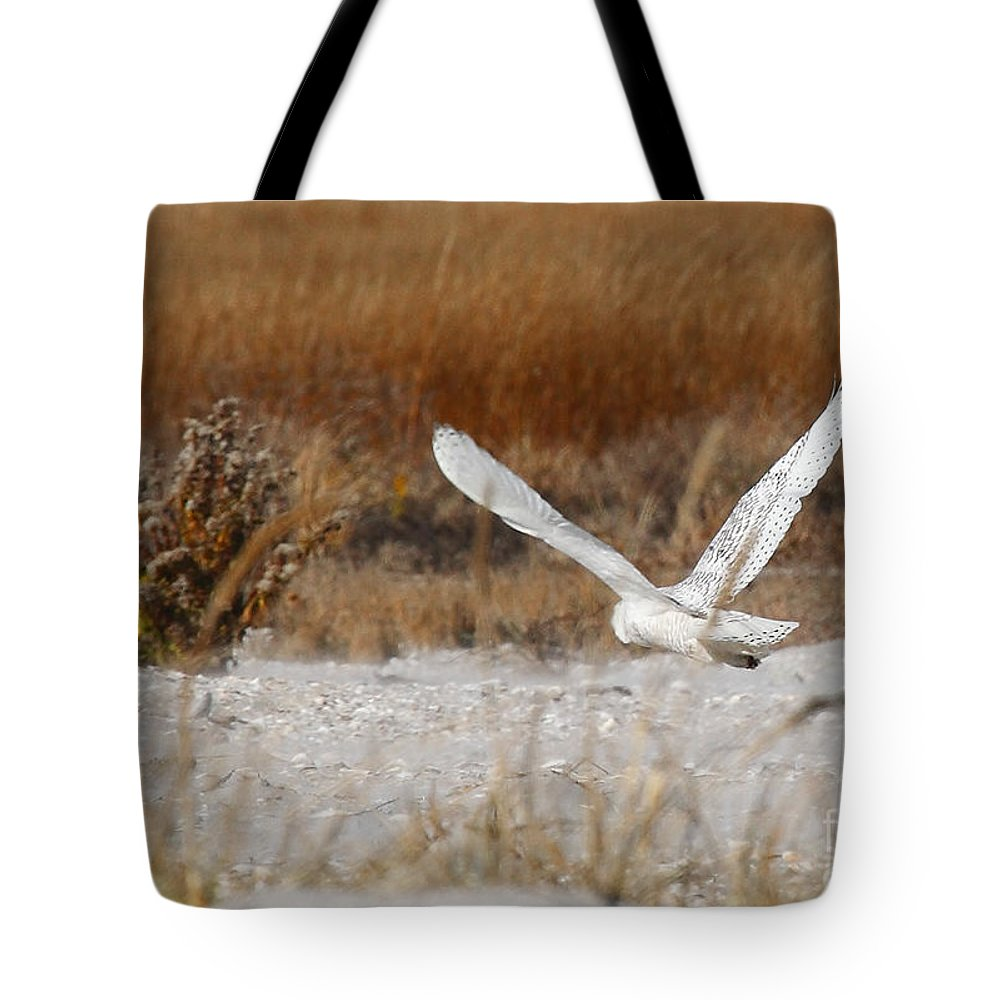 snowy Owl Tote Bag featuring the photograph Snowy Owl On The Hunt by Traci Law
