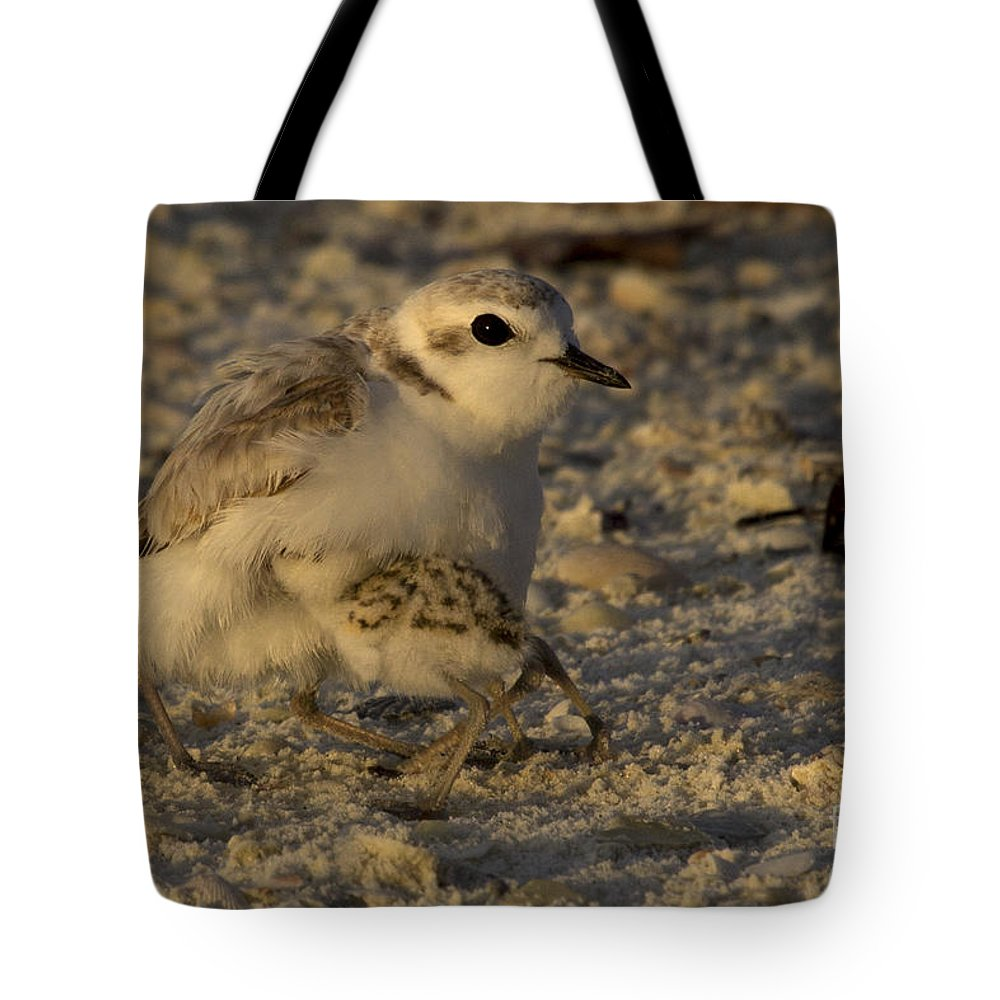 Snowy Plover Tote Bag featuring the photograph Snowy Plover Transformation Into A Spiderbird 1 by Meg Rousher