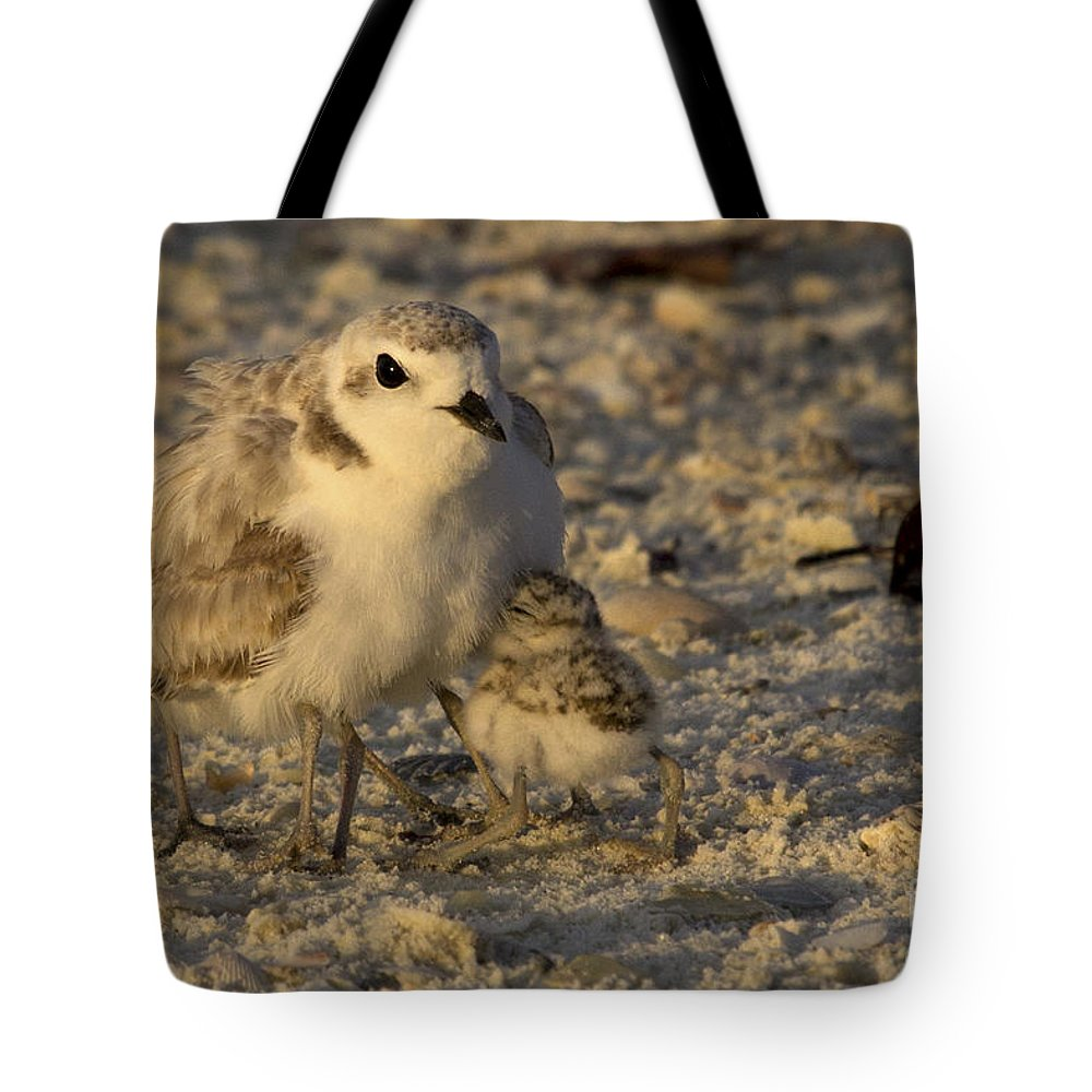 Snowy Plover Tote Bag featuring the photograph Snowy Plover Transforms Into A Spiderbird 5 by Meg Rousher