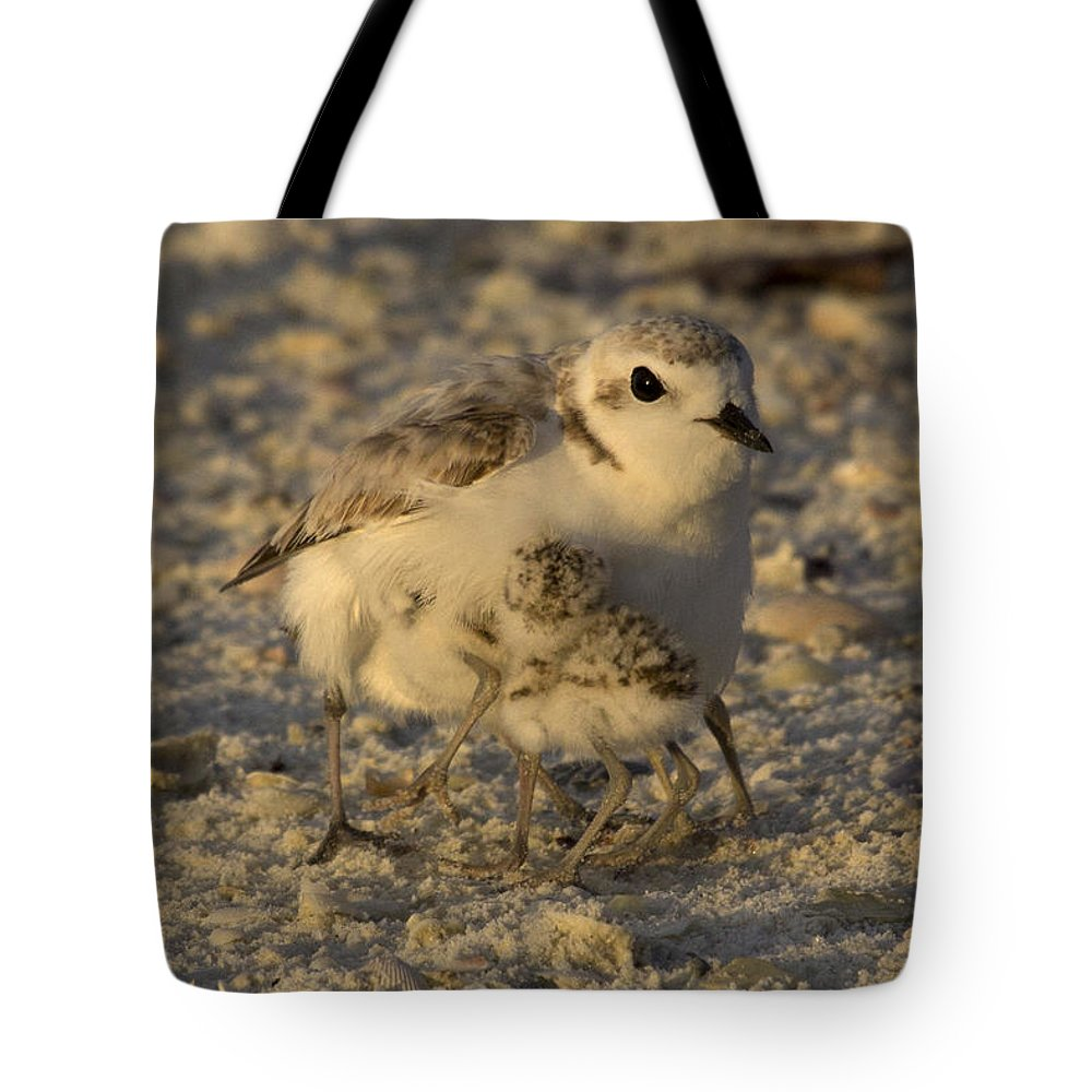 Snowy Plover Tote Bag featuring the photograph Snowy Plover Transforms Into A Spiderbird 6 by Meg Rousher