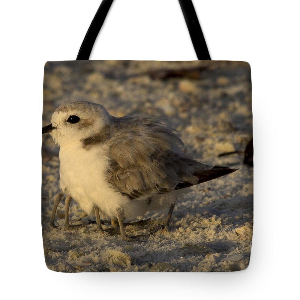 Snowy Plover Tote Bag featuring the photograph Snowy Plover Transforms Into A Spiderbird 8 by Meg Rousher
