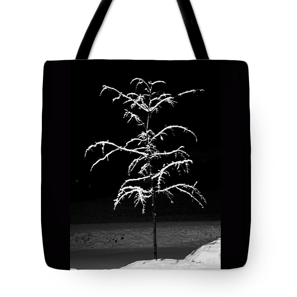 Snow Tote Bag featuring the photograph Snowy Sophistication - An Elegant Fledgling by John Stephens