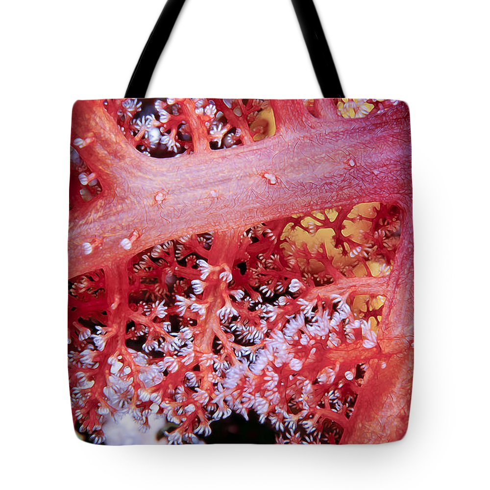 Micronesia Tote Bag featuring the photograph Soft Corals 2 by Dawn Eshelman