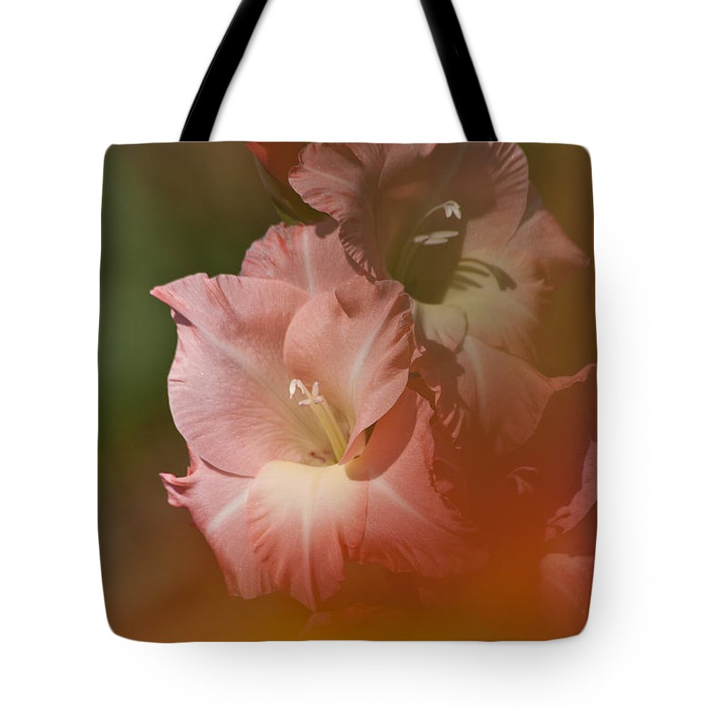 Gladiolus Tote Bag featuring the photograph Soft Gladiolus by Heiko Koehrer-Wagner