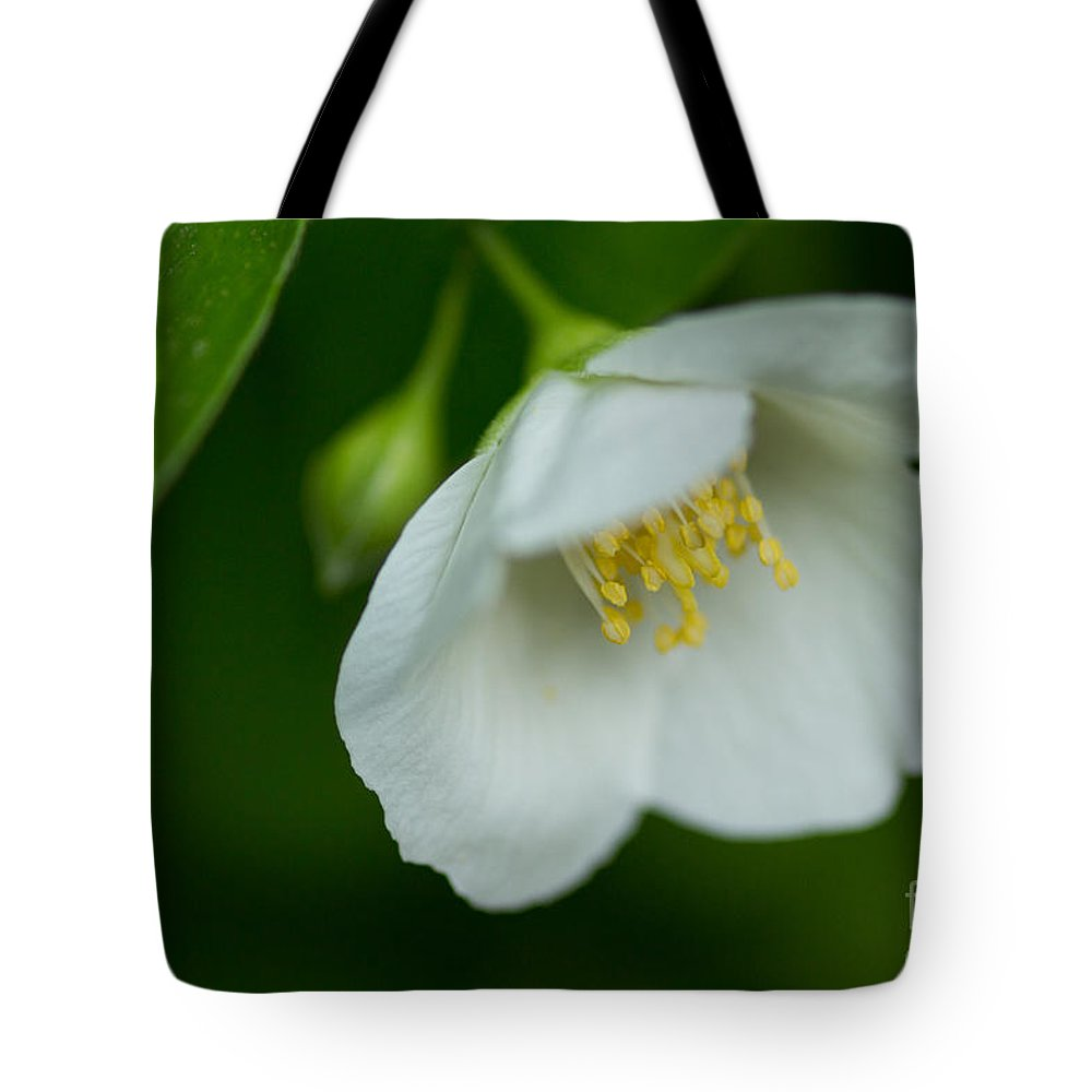 Sandra Clark Tote Bag featuring the photograph Softly Bowing by Sandra Clark