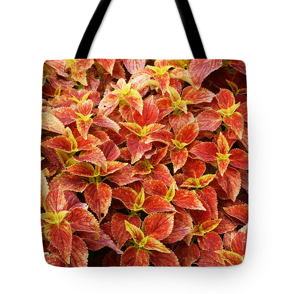 Greeting Card Tote Bag featuring the photograph Solenostemon by Paul Mashburn