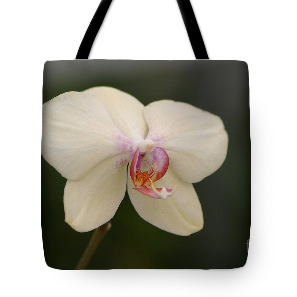 Orchids Tote Bag featuring the photograph Solo Act by Living Color Photography Lorraine Lynch