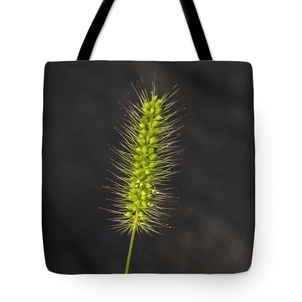 Weed Tote Bag featuring the photograph Solo by Judy Hall-Folde