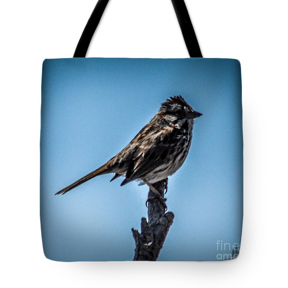 Bird Tote Bag featuring the photograph Song Sparrow On Top Of Branch by Ronald Grogan