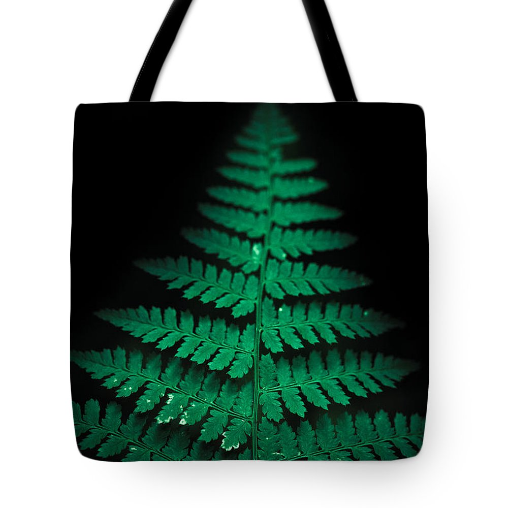 Fern Tote Bag featuring the photograph Soothing Fern by Shane Holsclaw