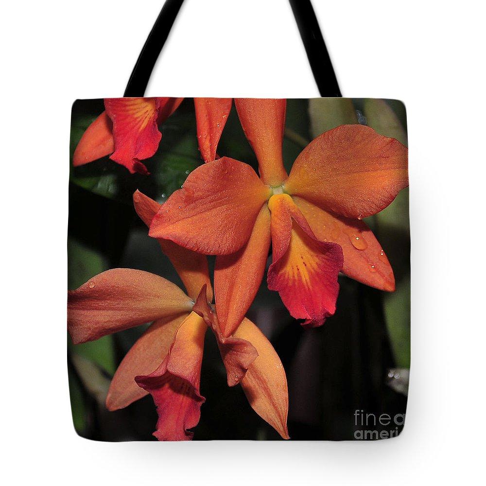 Orange Orchid Tote Bag featuring the photograph Sophrolaeliocattleya Maui Elf by Terri Winkler