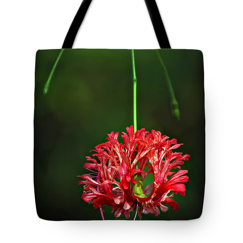 Flower Tote Bag featuring the photograph Southern Belle by Steve Harrington