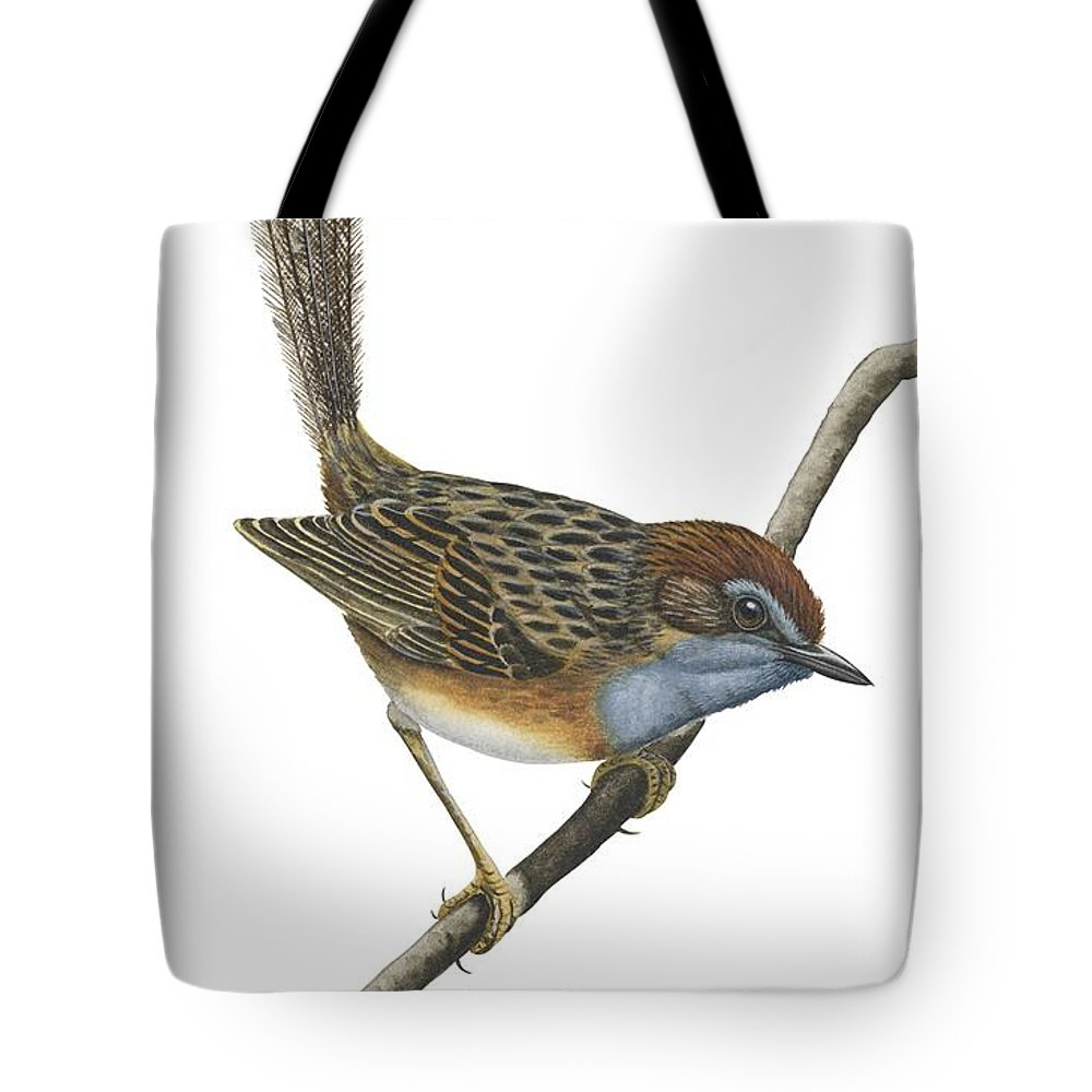No People; Vertical; Full Length; White Background; One Animal; Animal Themes; Illustration And Painting; Southern Emu-wren; Branch; Perching; Bird; Stipiturus Malachurus Tote Bag featuring the drawing Southern Emu Wren by Anonymous