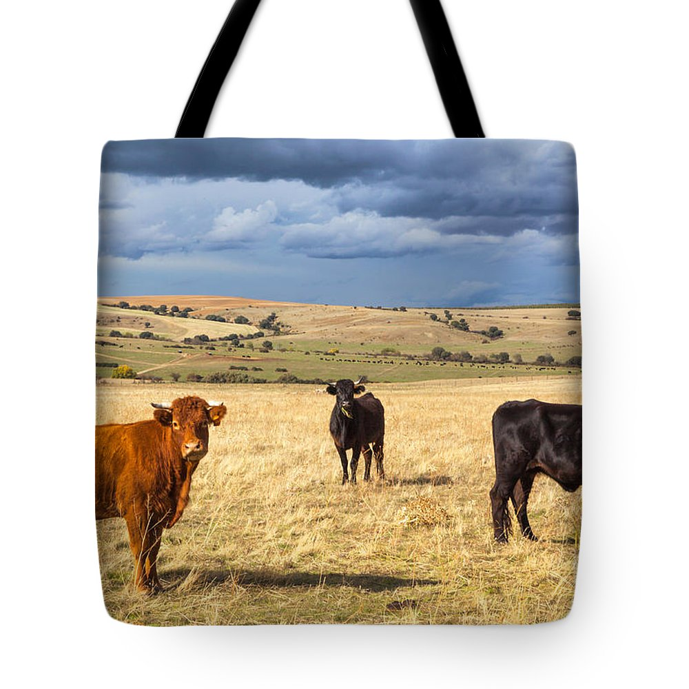Ranch Tote Bag featuring the photograph Spanish Bulls by JR Photography