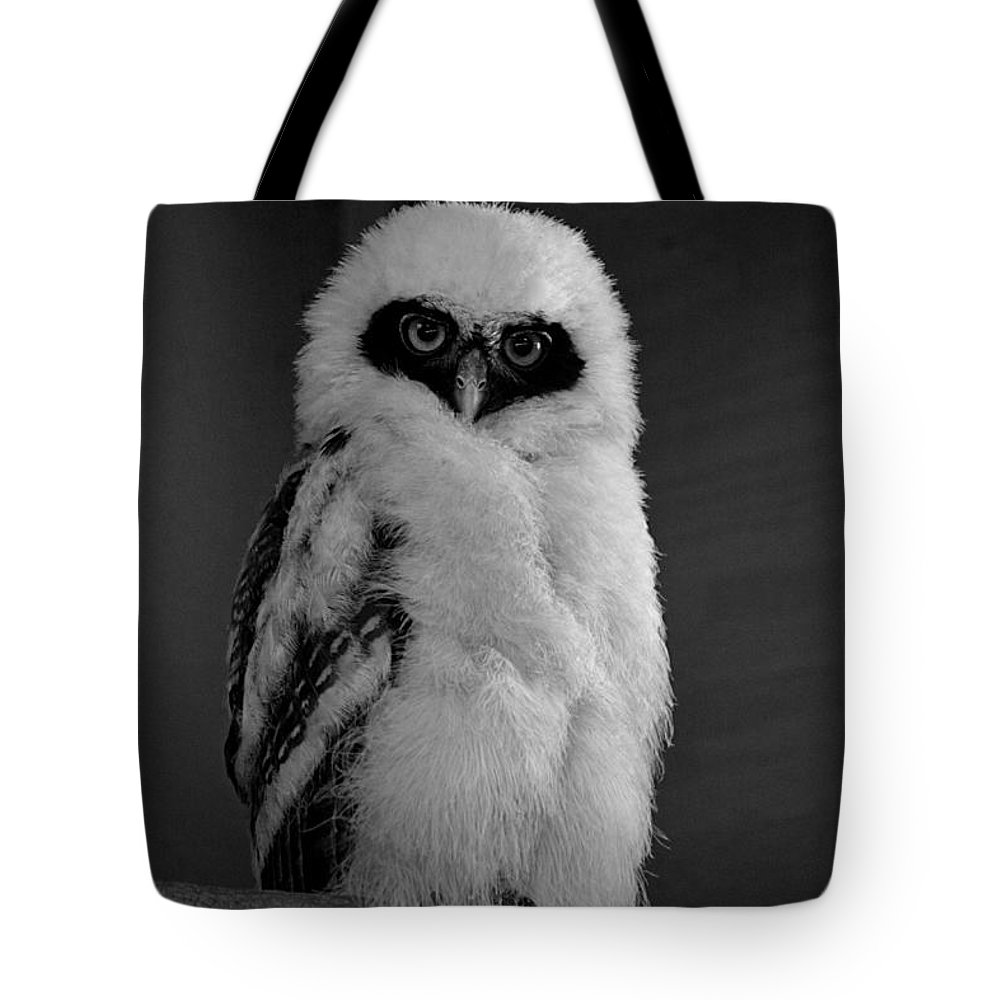Owlet Tote Bag featuring the photograph Speckled Owlet by Janice Spivey