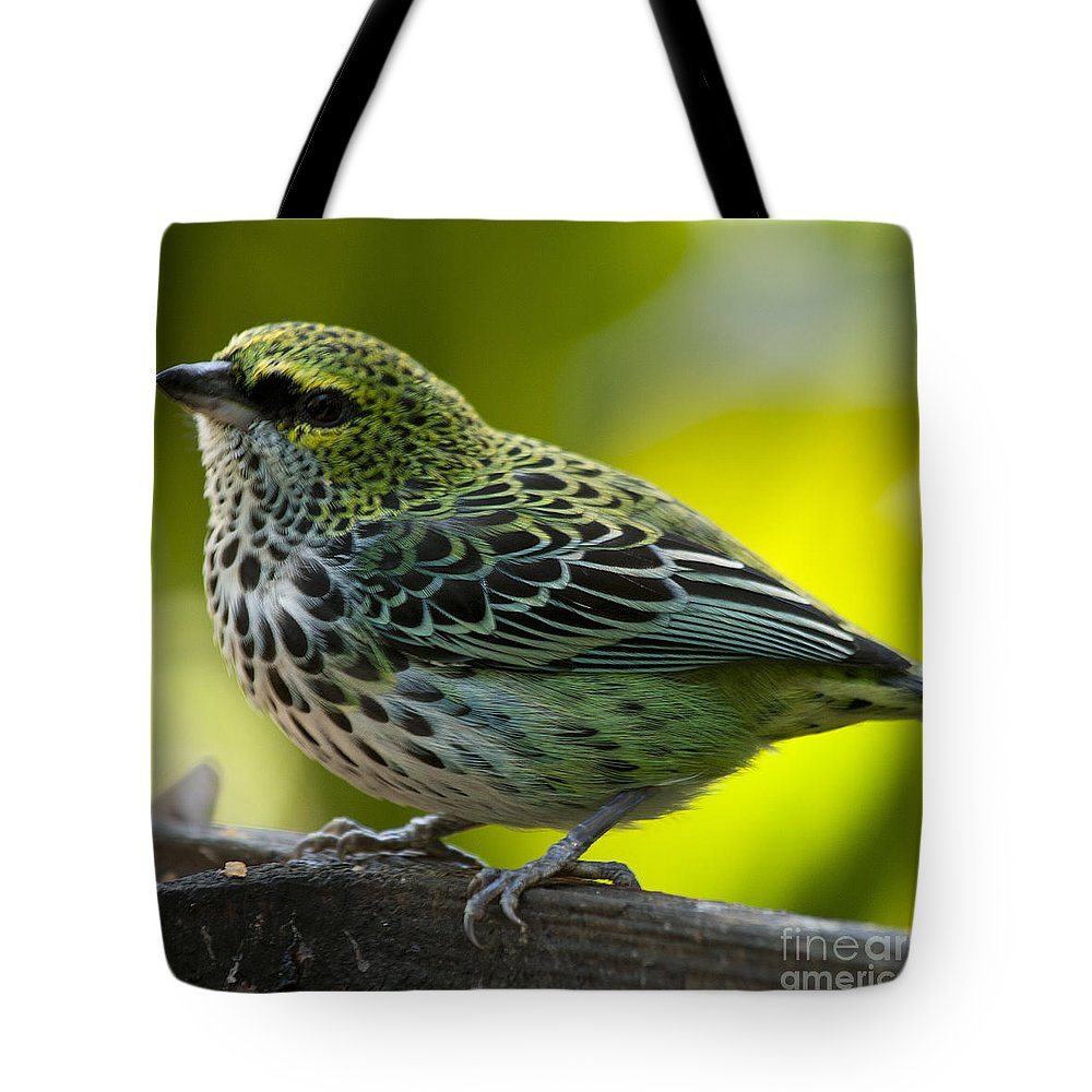 Tanager Tote Bag featuring the photograph Speckled Tanager - Tangara Guttata by Heiko Koehrer-Wagner