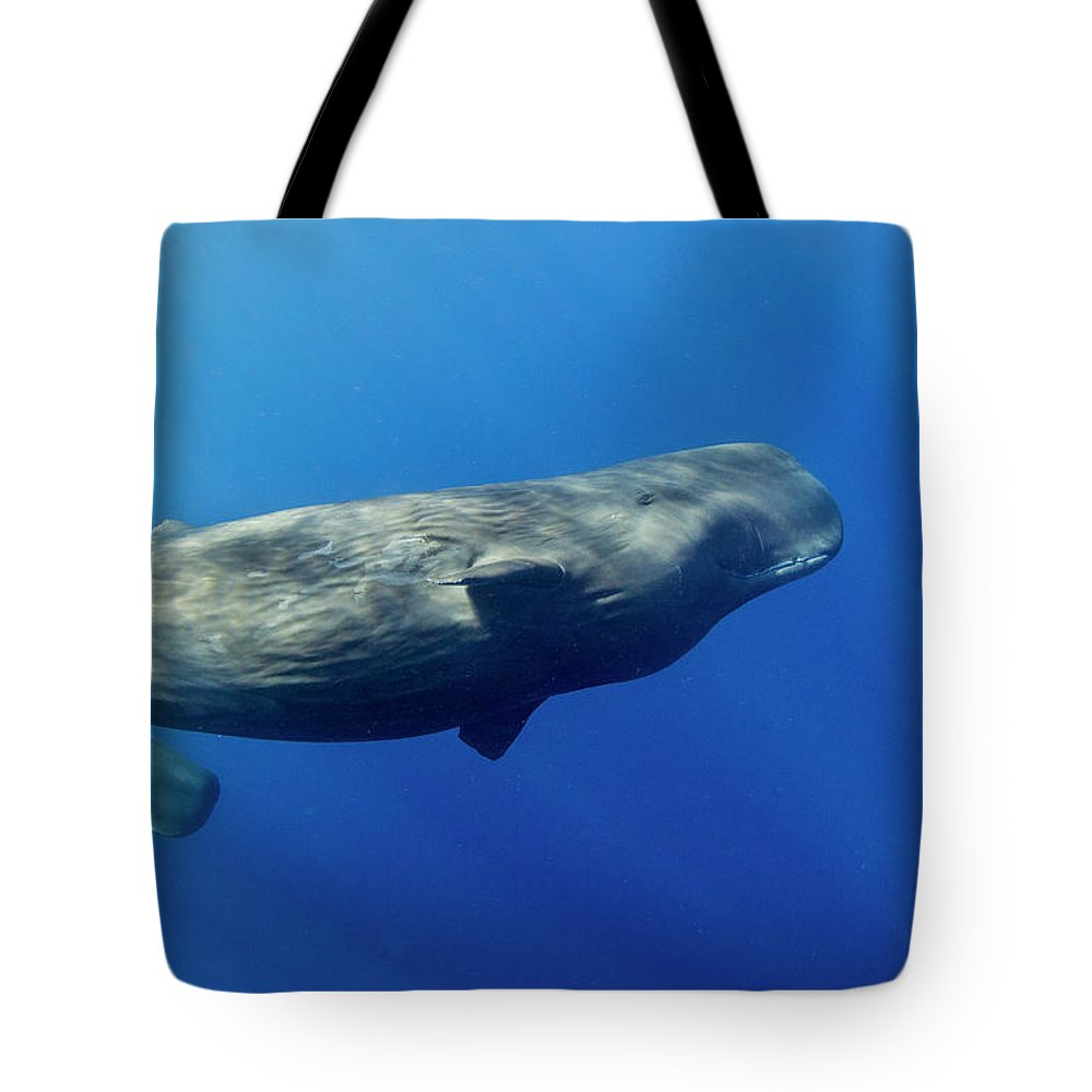 Underwater Tote Bag featuring the photograph Sperm Whale Pyseter Macrocephalus by Stephen Frink