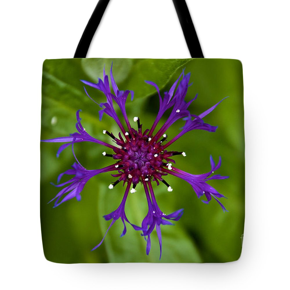 Blue Flower Tote Bag featuring the photograph Spider Burst by William Norton