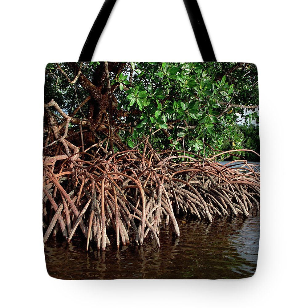 Acanthaceae Tote Bag featuring the photograph Spider Mangroves Oro Bay by Mike Parry