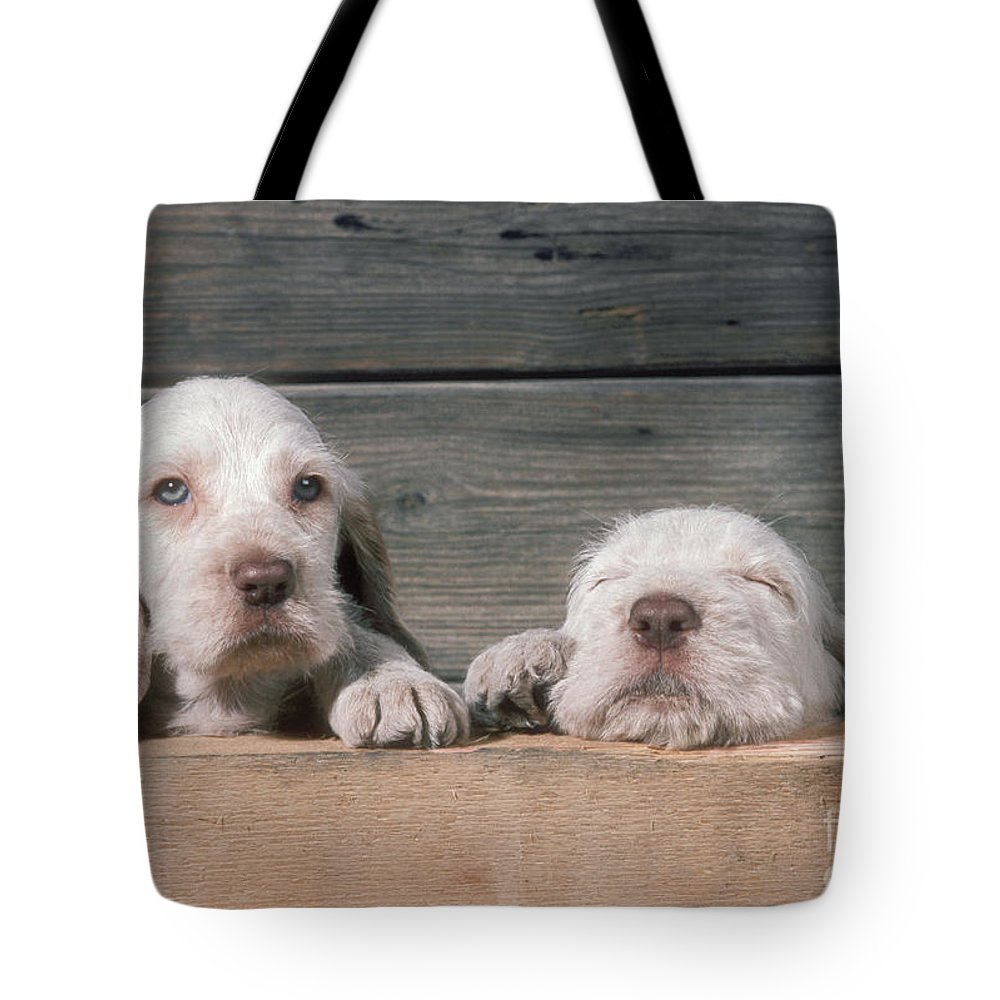 Spinone Tote Bag featuring the photograph Spinone Puppies by John Daniels