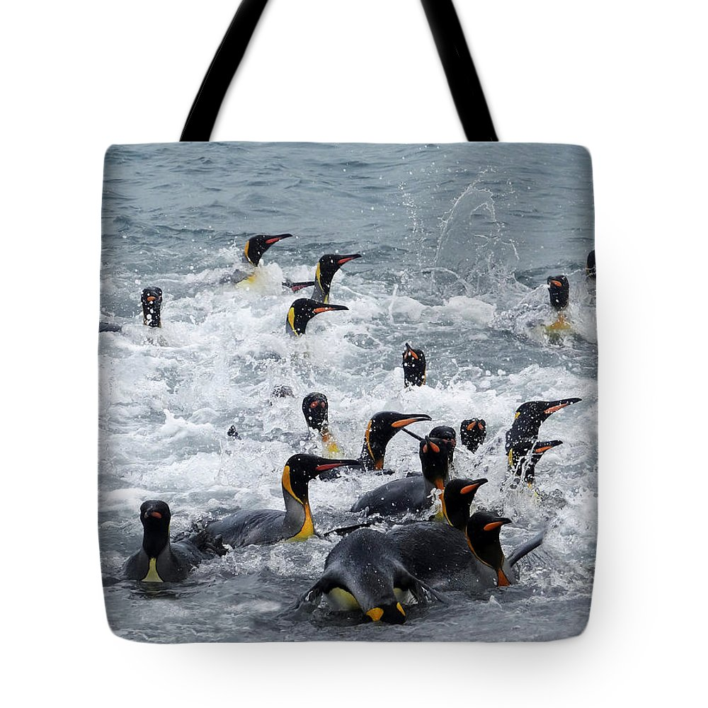 King Penguins Tote Bag featuring the photograph Splish Splash by Ginny Barklow