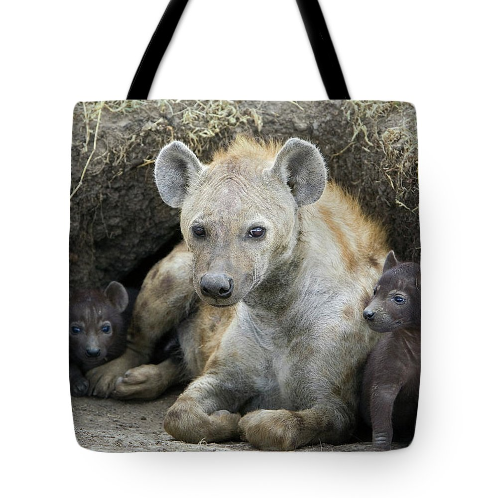Africa Tote Bag featuring the photograph Spotted Hyena Mother And Pups by Suzi Eszterhas