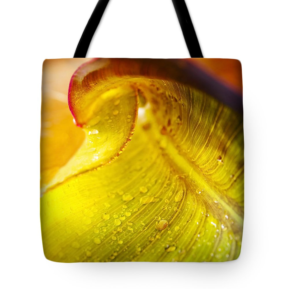 Background Tote Bag featuring the photograph Sprial Leaf by Tim Hester