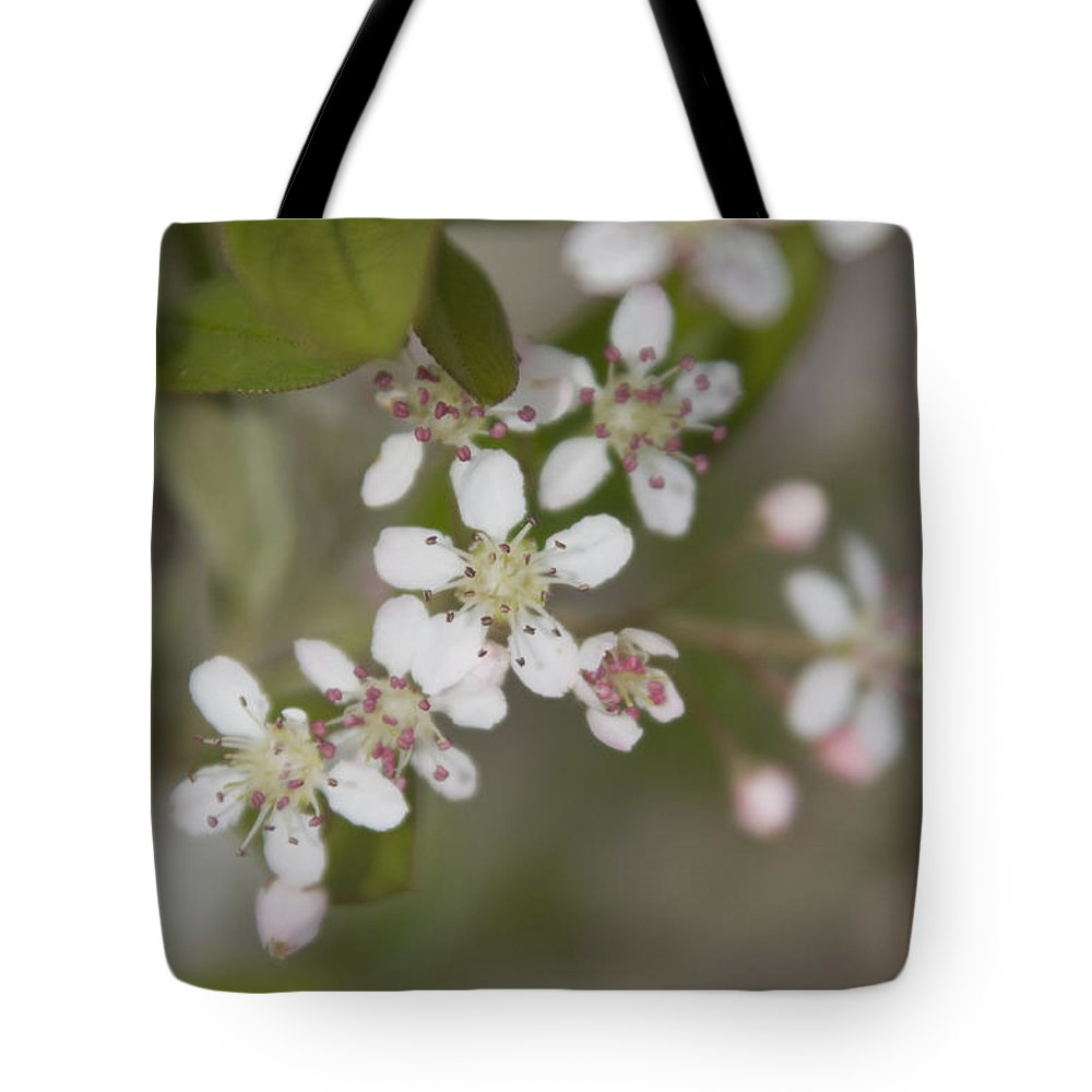 Spring Tote Bag featuring the photograph Spring Blossoms by Jayne Gohr